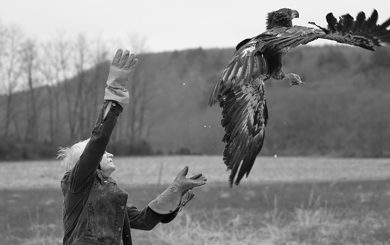 release a rehabilitated eagle