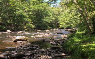 Mongaup River scene