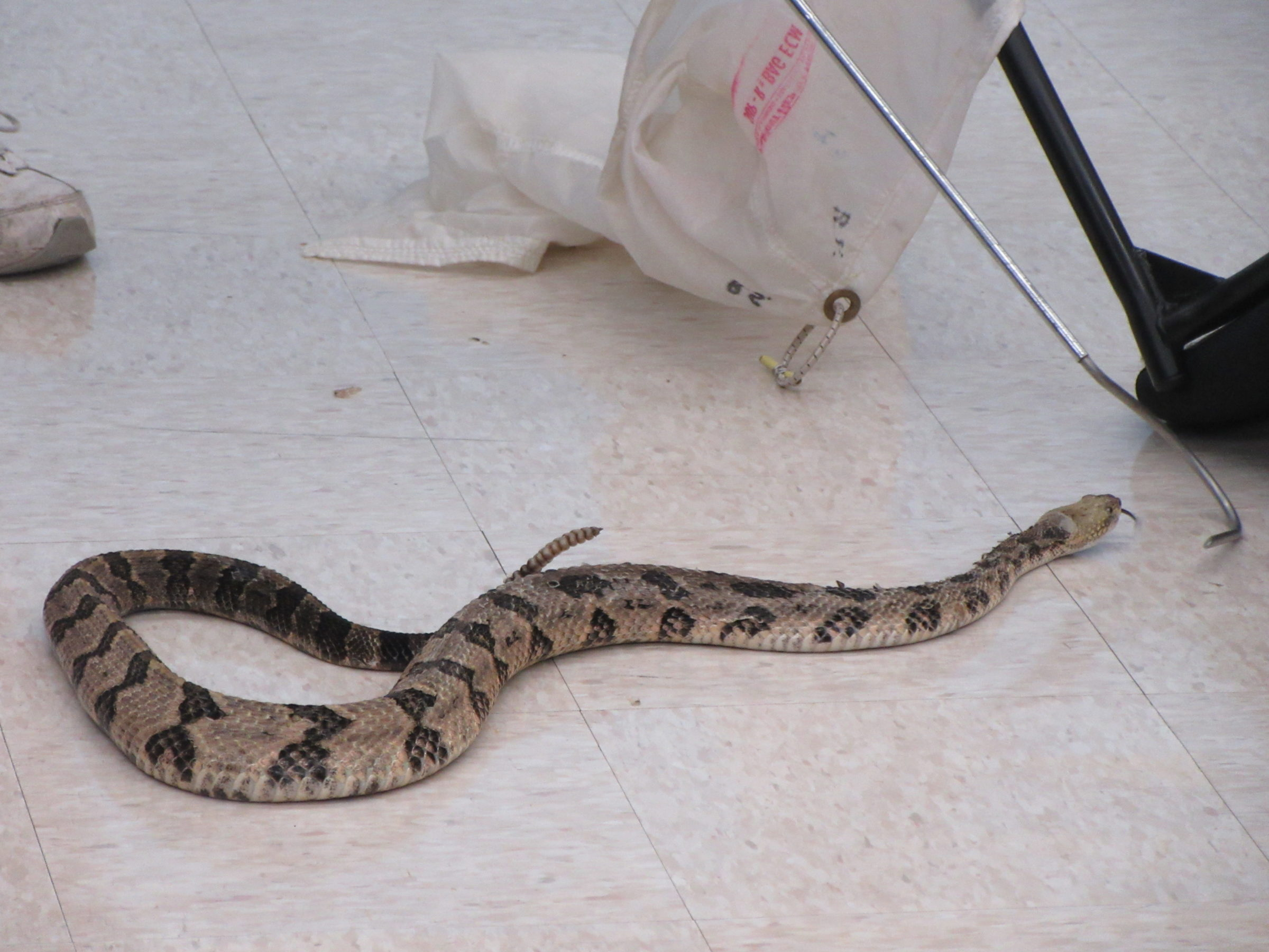 Randy Stechert Habits and Habitats of Venomous Snakes presentation