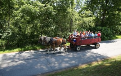 a wagon ride being pulled by draft horses
