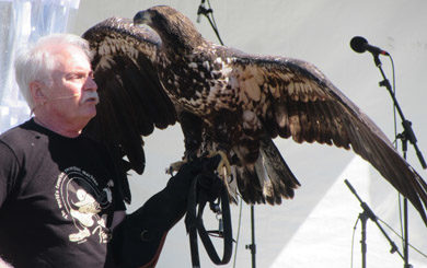 Bill Streeter with rehabilitated Golden Eagle